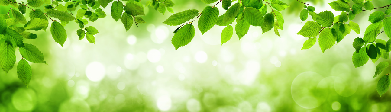 Green leaves and blurred highlights in the background build a natural frame in panorama format